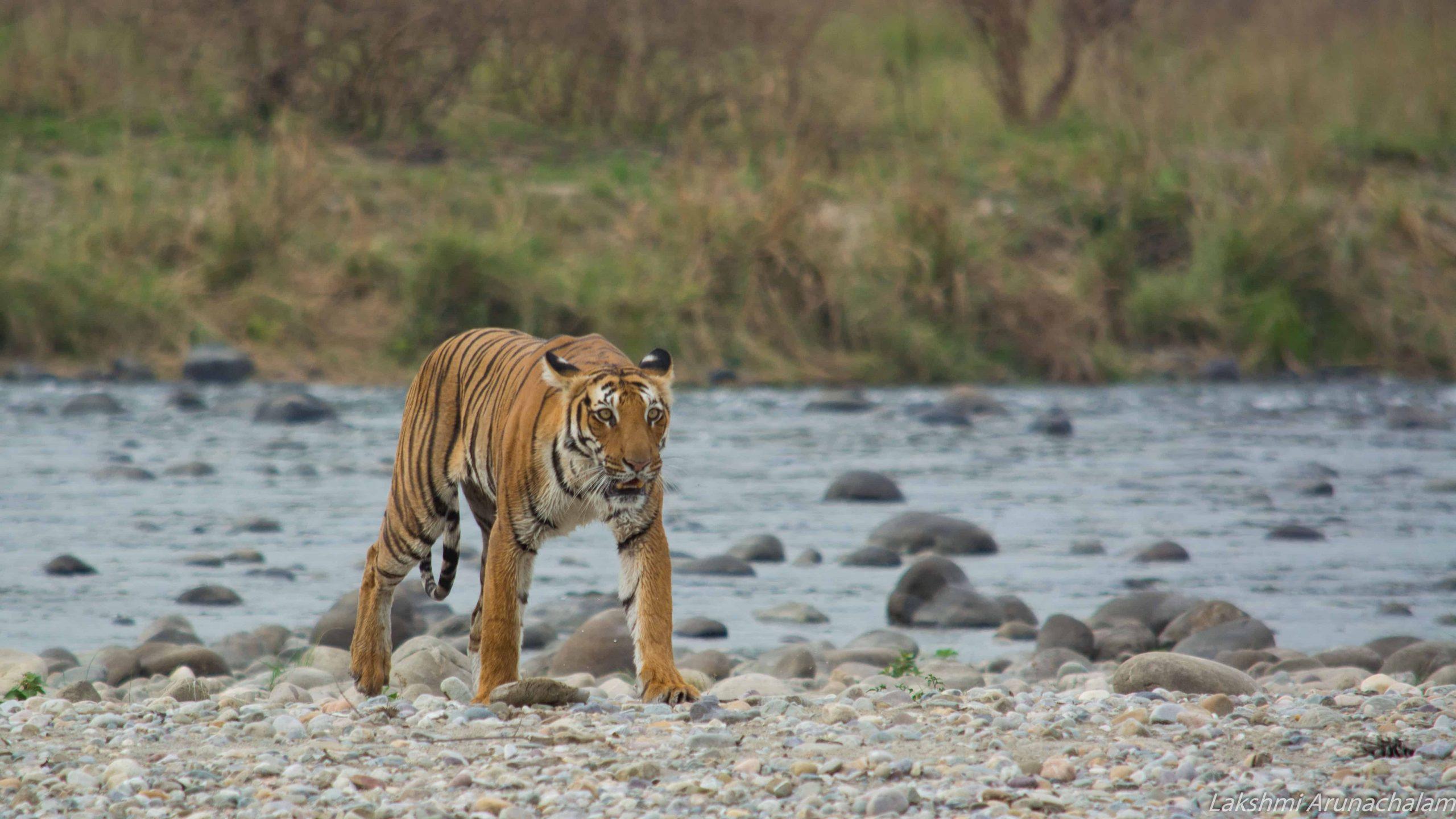 visit Kanha Tiger park